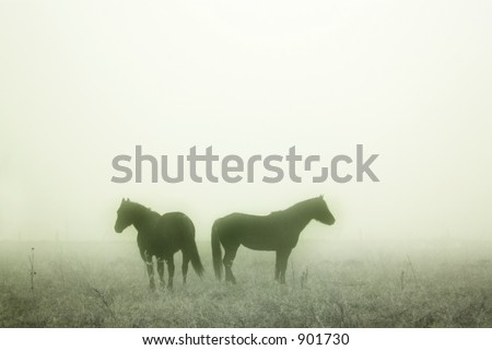 Horses in the Fog - stock photo