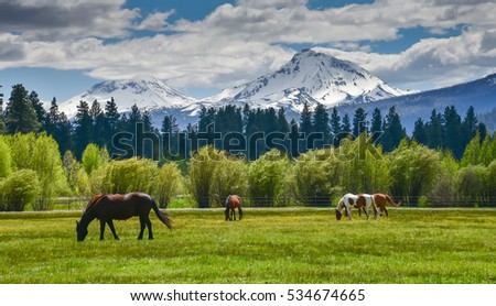 Cascade mountains stock images royalty free images vectors horses in the foreground with the beautiful mountains of north sister and middle sister they sciox Gallery