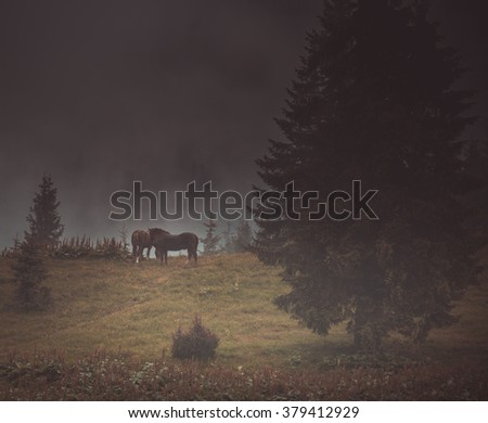 Horses in the mountains - stock photo
