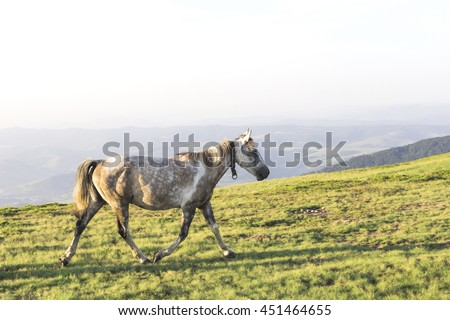 Horses in the mountains landscape, summer day