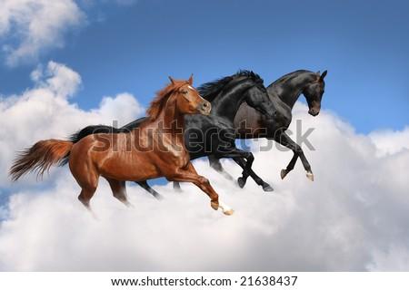 Horses in the sky - stock photo
