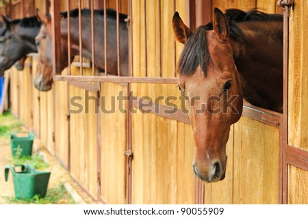 Horses in the stable - stock photo