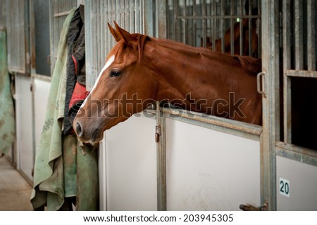 Horses in their stable  - stock photo