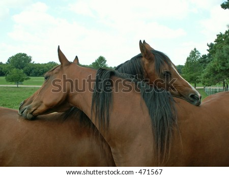 horses intertwined - stock photo