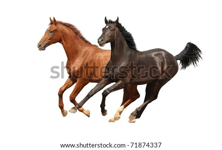 Horses isolated - stock photo