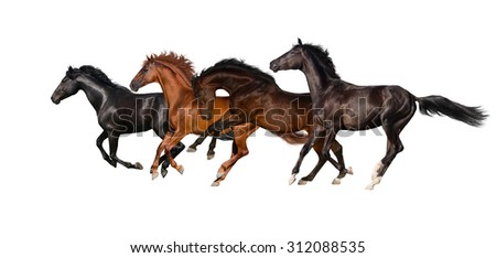 Horses isolated on white background