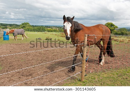Horses kept on limited grazing with the use of electric fencing - stock photo
