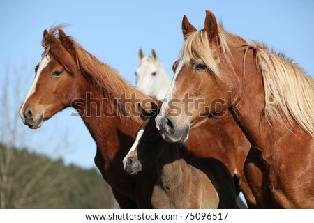 Horses looking - stock photo