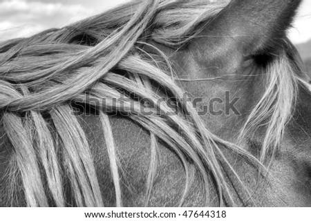 Horses Mane - stock photo