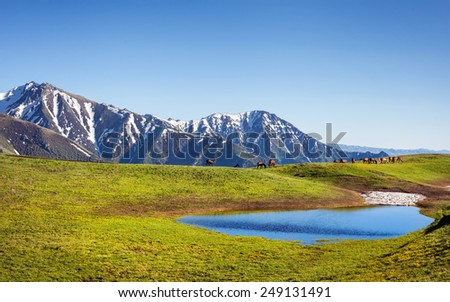 Horses near the lake in the mountain valley with green grass in Dzungarian Alatau, Kazakhstan, Central Asia - stock photo