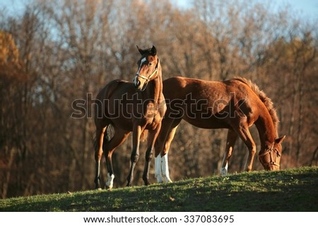 Horses on a background of autumn trees. - stock photo