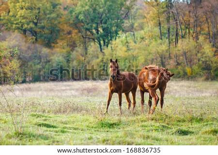 Horses on a farm field.  - stock photo