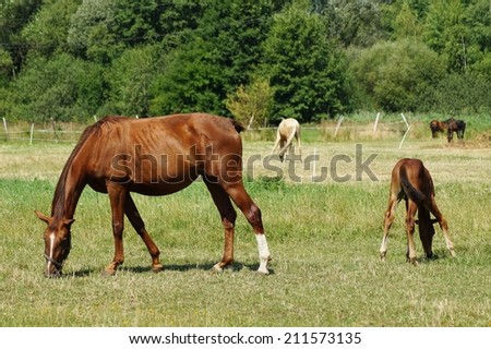 Horses on a farm in a summer meadow