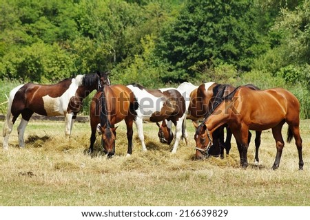 Horses on a farm in a summer meadow - stock photo