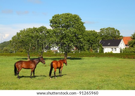 Horses on a farm in Norway. Norwegian countryside. - stock photo