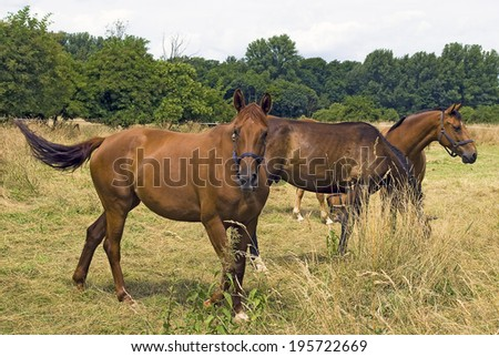 horses on a meadow
