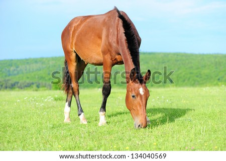 Horses on a meadow in summer day - stock photo