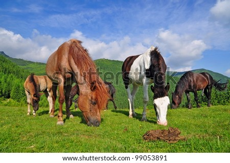 Horses on a summer mountain pasture.