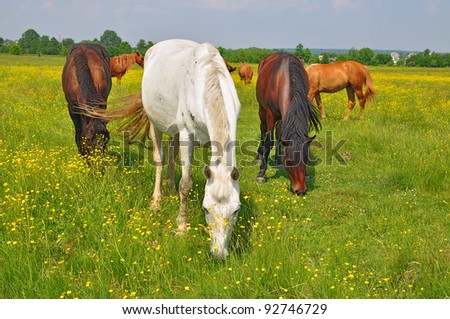 Horses on a summer pasture. Horses on a summer pasture in a rural landscape. - stock photo