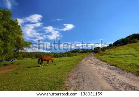 Horses on farm against blue sky - stock photo