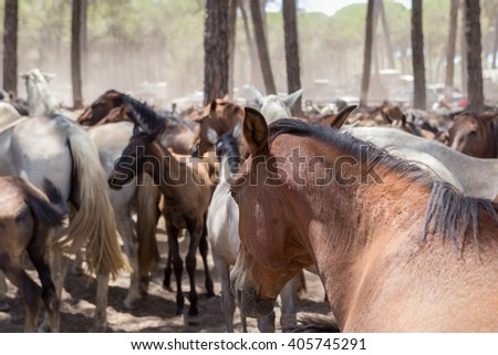 Horses on pasture after a walk. Spain. - stock photo