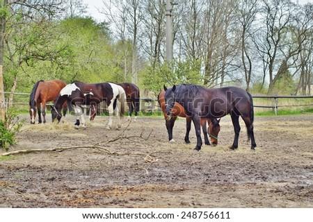 horses on the farm - stock photo