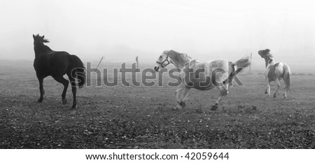 Horses on the field. - stock photo