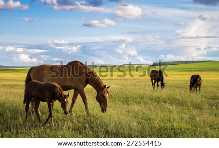 horses on the field, big and little horse - stock photo