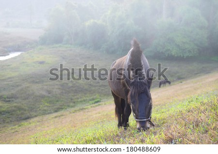 horses on the morning pasture - stock photo
