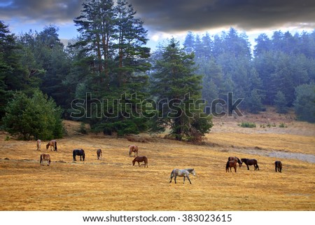 horses on wonderful spring meadow during calm morning sunrise near by colored misty forest - stock photo