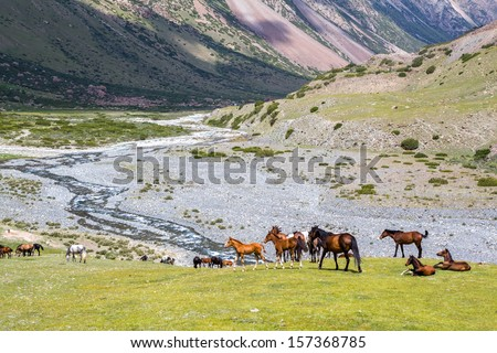 Horses pasturing on grass in mountains of Tien Shan - stock photo