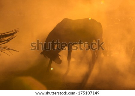 Horses preparing for riding - stock photo