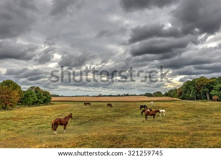 Horses quietly grazing in a field on a Maryland farm near sunset in Autumn - stock photo