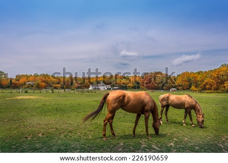 Horses quietly grazing on a rural Maryland farm - stock photo