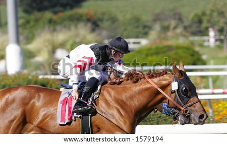 Horses Race Neck and Neck - stock photo