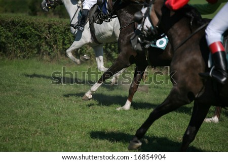Horses racing to the finish line, focus on the middle one. - stock photo