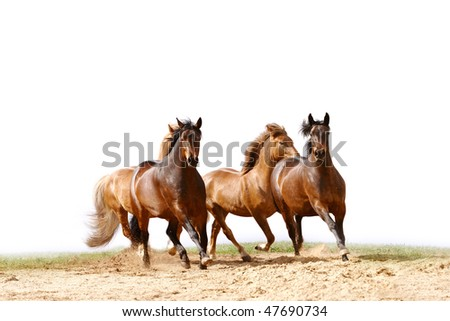 horses run - stock photo