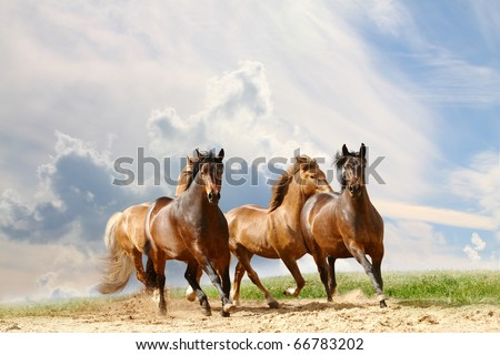 horses run - stock photo