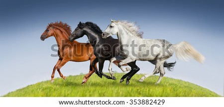 Horses run gallop on green pasture against beautiful sky