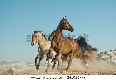 horses run in a wild - stock photo
