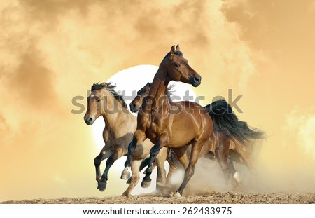 horses run in a wild on sunset