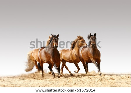 horses run on grey - stock photo