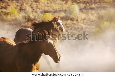 Horses Running Free - stock photo