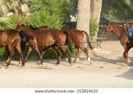 Horses running in a group - stock photo