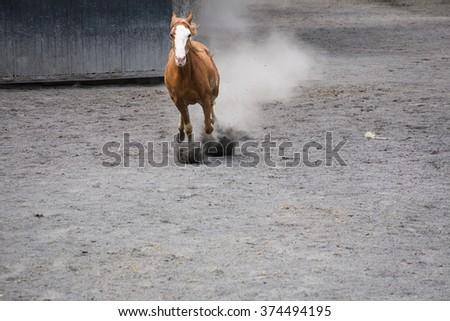 Horses running in the square. - stock photo