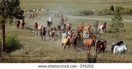 Horses running uphill - stock photo