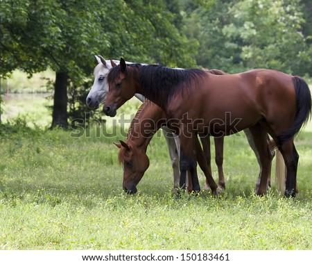Horses Sleeping - stock photo