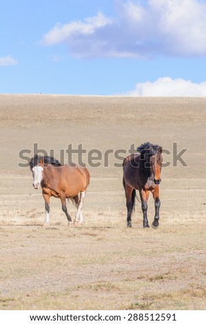 Horses striding in Altai steppe in early spring - stock photo
