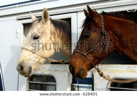 Horses waiting to depart after a rodeo. - stock photo