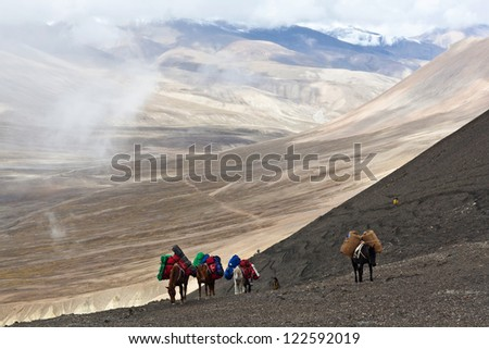 Horses with load at the Sangda pass in Upper Dolpo region, Nepal - stock photo